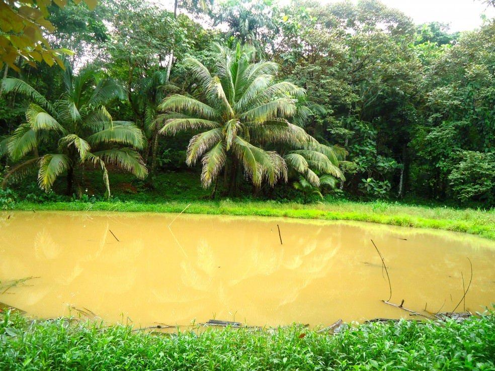 Bocas Del Toro.