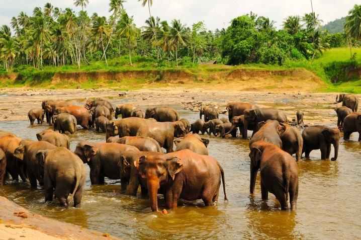 Travelling solo in Sri Lanka