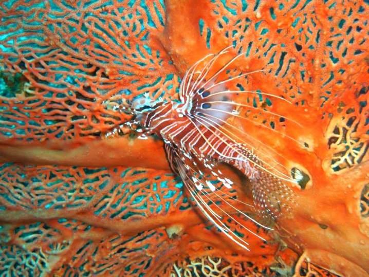 Best places for scuba diving