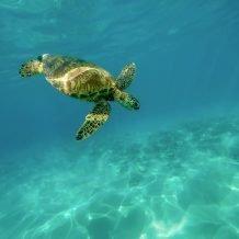 Blue Ventures: Become a Conservation Volunteer