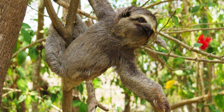 Green World Adventures: Costa Rica Adventures