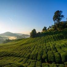 solo travel in Malaysia