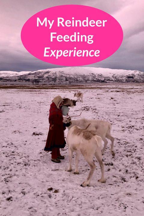 Reindeer Feeding & Experiencing Sami Culture