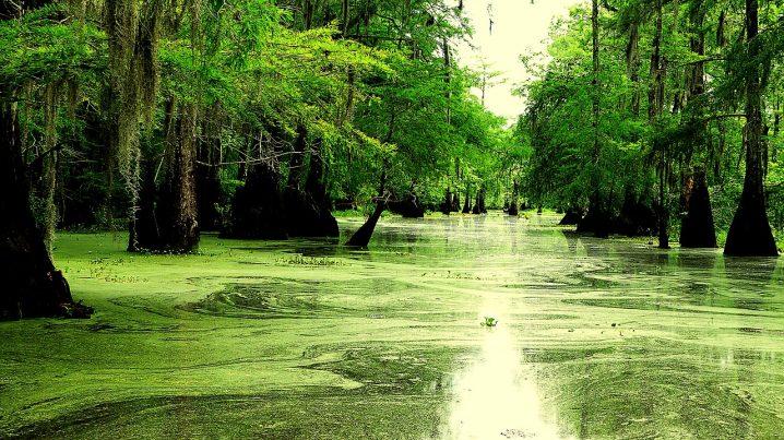 Solo travel in Louisiana