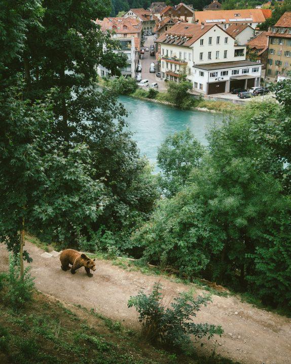 Bern activities