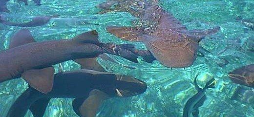 Shark Ray Alley