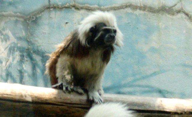 Mexico Zoo